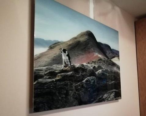 Más ideas para imágenes de Herschel Inspire como esta imagen favorita de una mascota